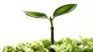 19 jenis tanaman dalam Al-qur'an
