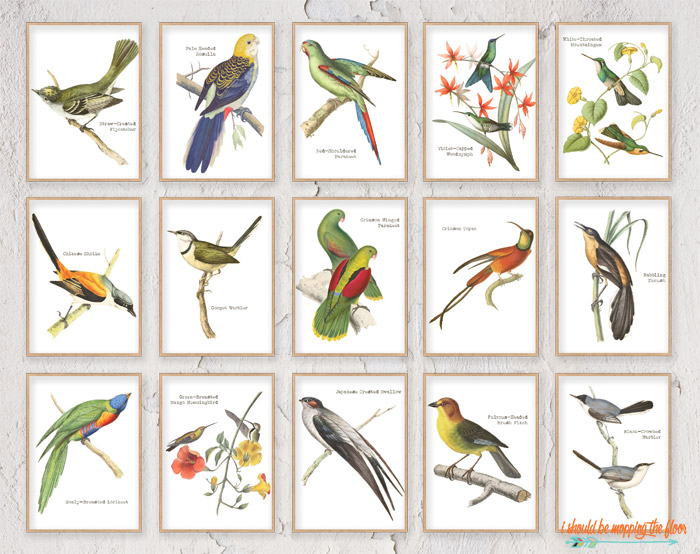 Vintage Bird Printables