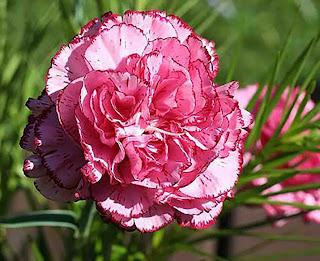 اجد صور زهور رائعة حلوة