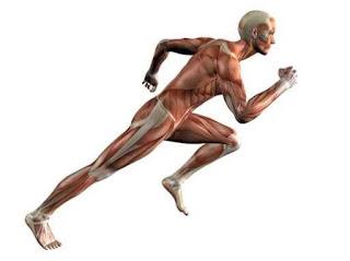 Aspectos del funcionamiento físico / Ejercicios terapéuticos