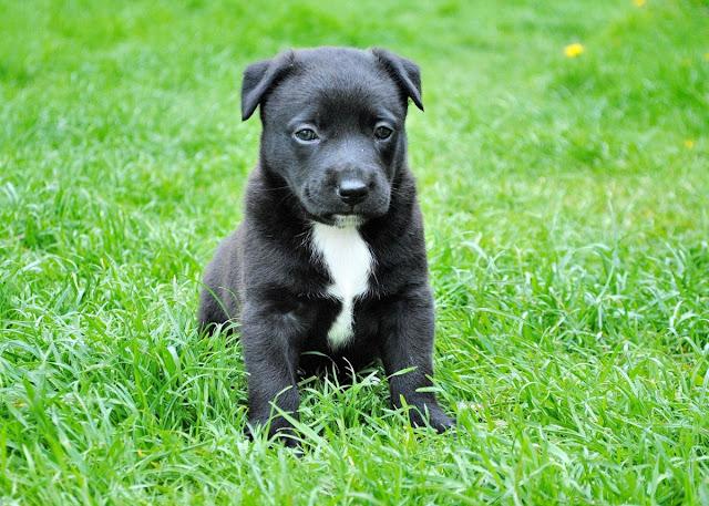 Dicas para nomes de cachorro, machos e fêmeas