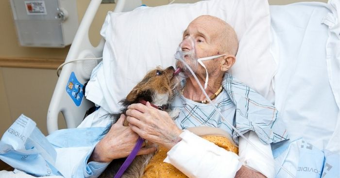 Dying veteran in hospice gets his final wish: to see his dog one last time