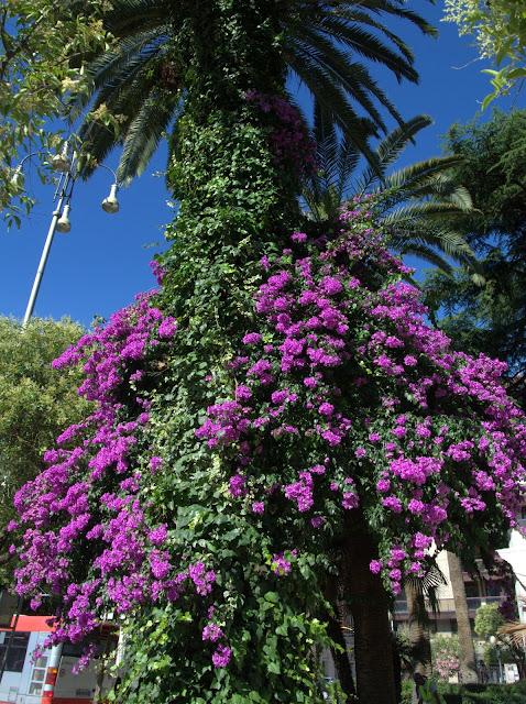 kwitnące kwiaty we Włoszech