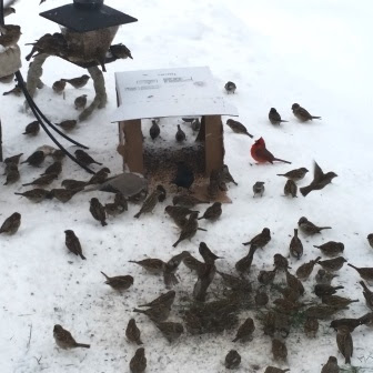 wild birds eating seeds