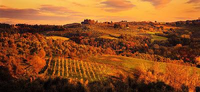foto vigne toscana