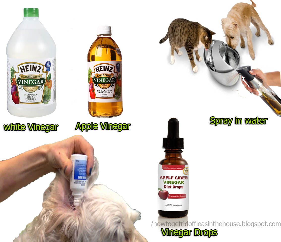 Natural Ways To Get Rid Of Flies On Dogs