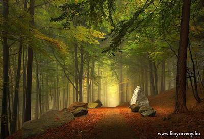 Az élet olyan, mint egy séta az erdőben...
