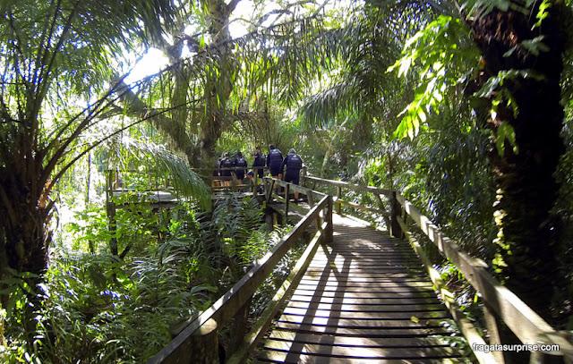 Bonito, Mato Grosso do Sul - trilha para a nascente do Rio Sucuri