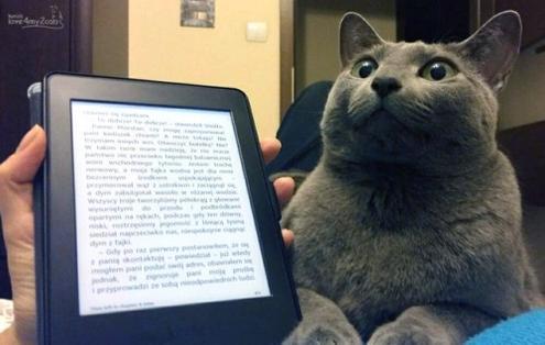 хозяйка читает коту книгу