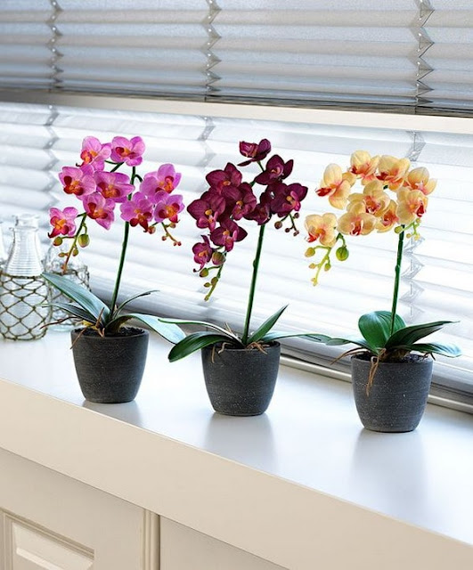 Decorate Your Interior With Orchids 10