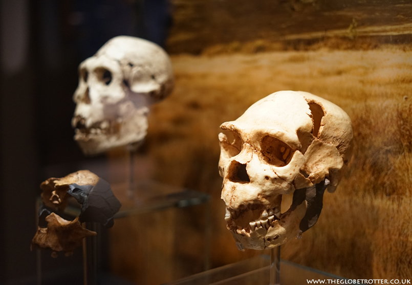 Visiting the Ashmolean Museum in Oxford   The World's First University Museum