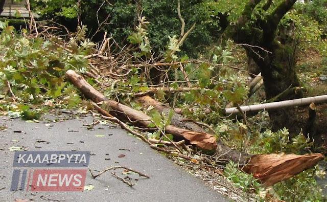 25χρονος έχασε τη ζωή του από πτώση δέντρου στα Καλάβρυτα