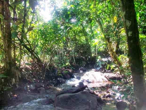 Taman Hutan Raya Sultan Adam Mandiangin - tempat wisata di kalimantan selatan