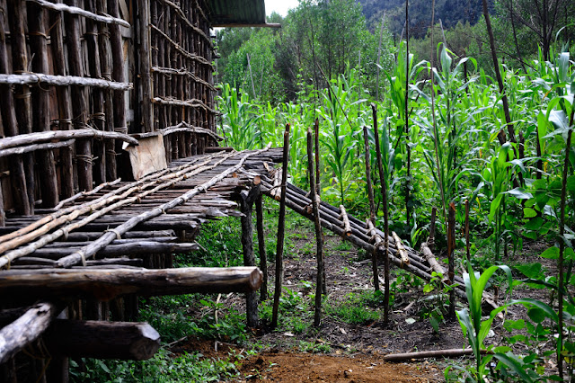 Thousand Foot House Typical Arfak Tribe