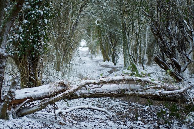 snow woods walk