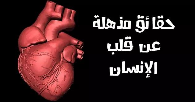 قلب الإنسان أو القلب