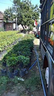 Pengiriman Pohon Ke Sulawesi