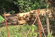 Ilegal Loging Marak, Bupati Pessel Diharap Turun Tangan