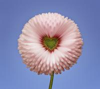 Resultado de imagem para flor exótica