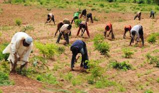 Panic As Armed Bandits Abduct Farmer In Ekiti