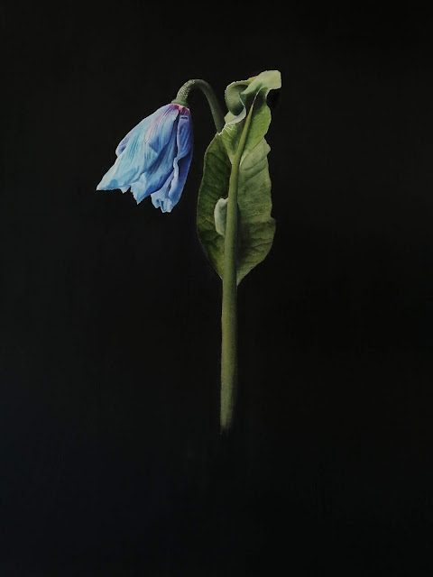 Blue Poppy by Jessica Rosemary Shepherd botanical art