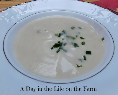 Puree of Celery Root Soup