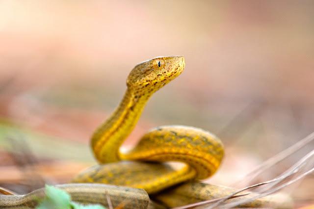 la serpiente tan astuta como siempre