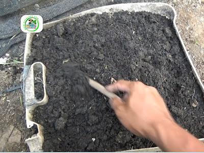 Foto 2-2. Media tanah untuk penyemaian   dari arang sekam padi