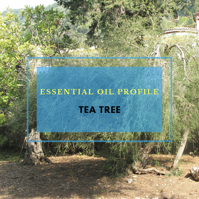 Essential Oil Profile: Tea Tree