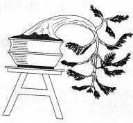 Gambar Bonsai anak air terjun