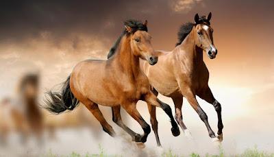 imagenes de manadas de caballos galopando