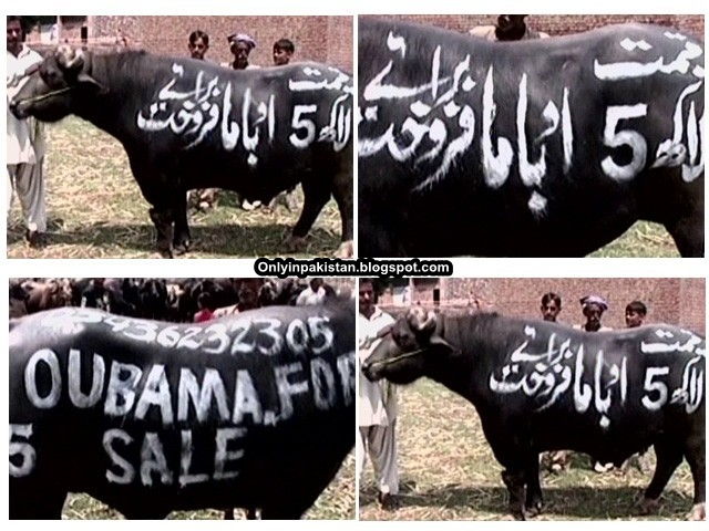 Funny Pakistani buffalo name