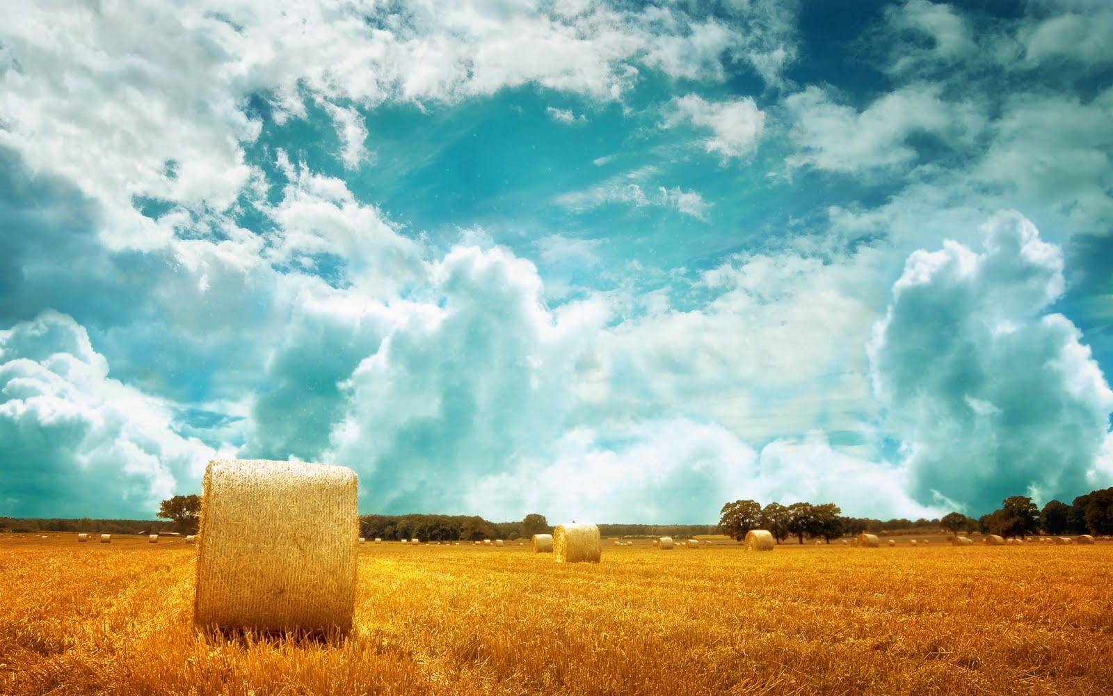 beautiful yellow field landscape - photo #36