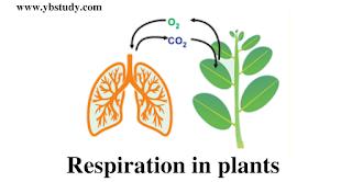 Respiration in plants NEET mcq