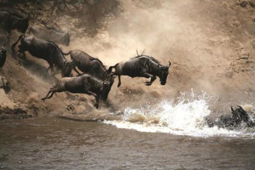 8 things to keep in mind when traveling in Kenya