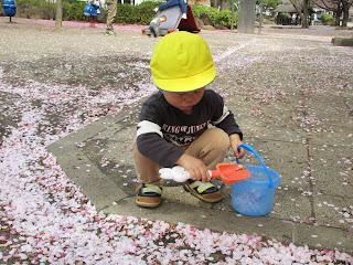 公園で桜の花びら遊び