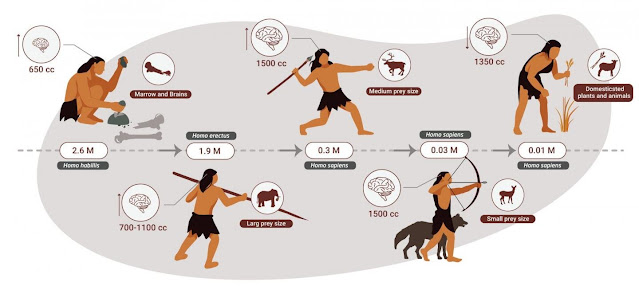 Humans were apex predators for two million years