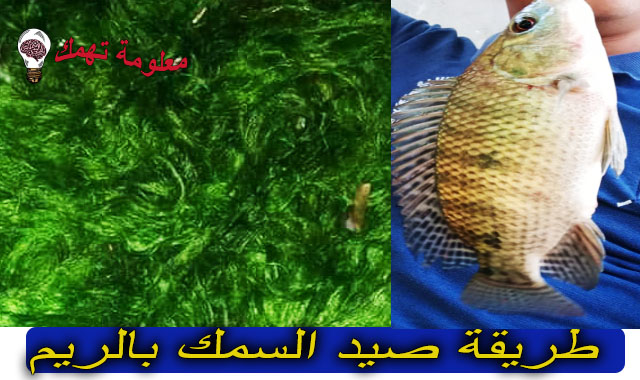 الصيد بالريم فى النيل
