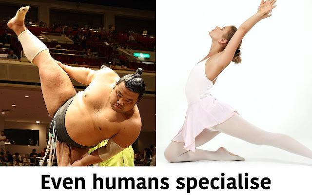 A sumo wrestler and ballet dancer showing how even humans function differently to specialise
