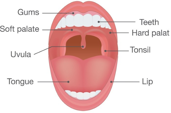 How to Remove and Prevent Tonsil Stones Naturaly at Home