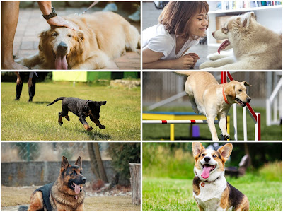 Different types of dogs for different types of people