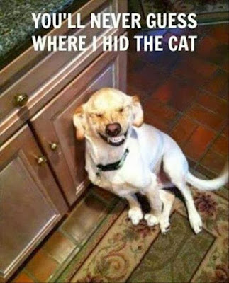Funny Dog Humor: Guess where i hid the cat?