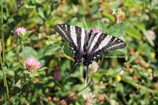 It's fun to know who's who in the garden. That way, when you start spotting the pollinators you've attracted, you'll know what you're spotting and some fun facts about them.