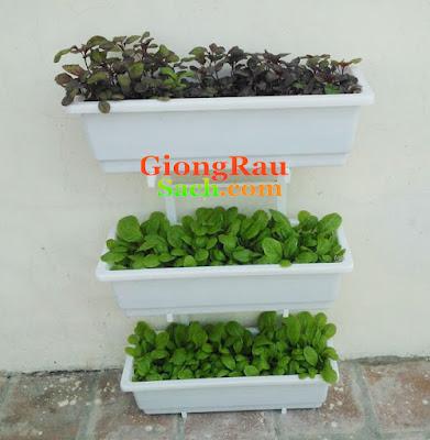 Kệ trồng rau 3 tầng ốp tường cho rau xanh tốt