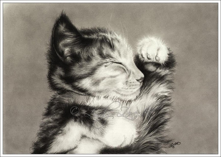 03-Kitten-Maine-Coon-Zindy-Nielsen-Fantasy-Animals-Meet-Realistic-Ones-www-designstack-co