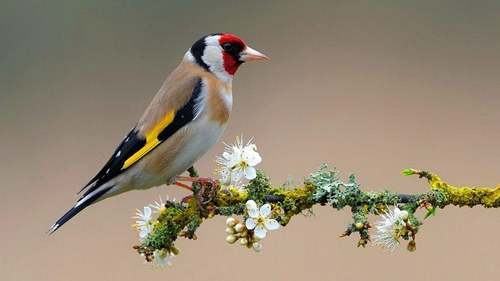 Birds Flowers Wallpapers HD