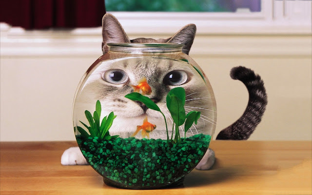 Funny cat looking at goldfish aquarium picture