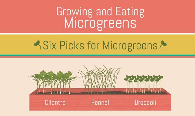 Growing and Eating Microgreens