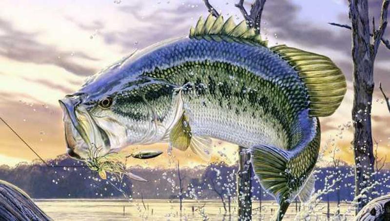 Chọn ngày đi câu được nhiều cá