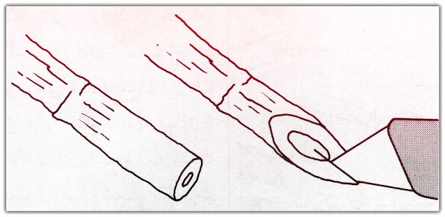 طريقة عمل ريشة القصب